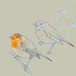 Workshop Bird Sketching